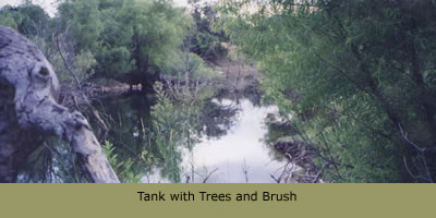 Tank with Trees and Brush